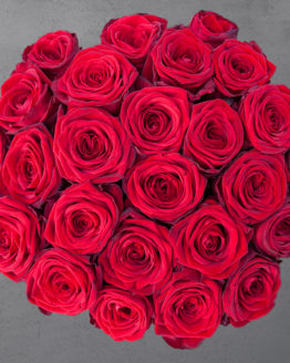 25 punast roosi