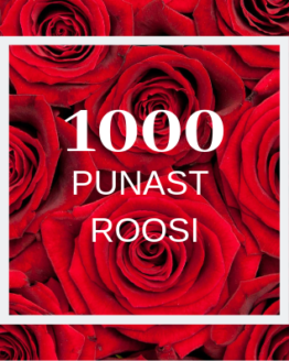1000 punast roosi